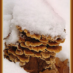 "photo ""Colors of autumn - White Coat"""
