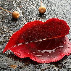 """photo """"smile of autumn"""""""