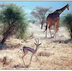 "фотоальбом ""Wild Life"""