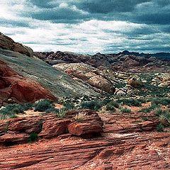 "фото ""Desert Storm"""