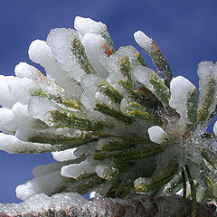 "photo ""Alive crystals."""