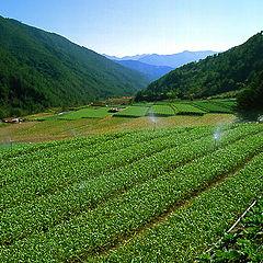 "photo ""Spirited Green World"""