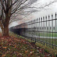 """photo """"Fenced In Fog"""""""