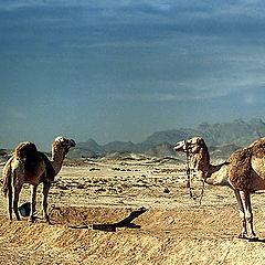 "photo ""Desert Ship"""