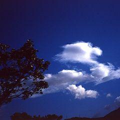 "фото ""lion on sky"""