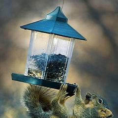 "photo ""Strange Bird At The Feeder"""