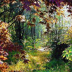 "photo ""Secret Garden"""