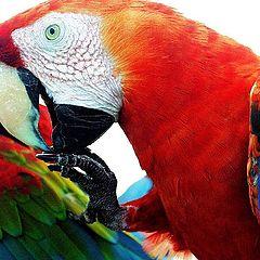 """фото """"Wings In Technicolor"""""""