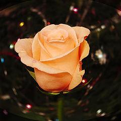 """фото """"Роза в новогоднюю ночь"""""""