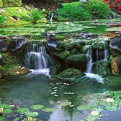 """photo """"Water Garden"""""""