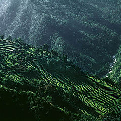 "photo ""Sikkim Terraces"""