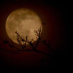 """фото """"Ночная жемчужина"""""""