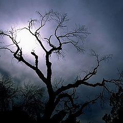 "фото ""Night Beauty"""