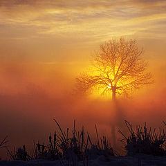 "photo ""The Magic Tree"""