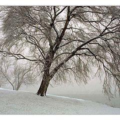 "photo ""First Snow"""