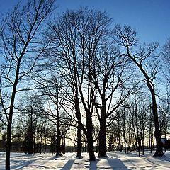 """фото """"Зимние деревья в Коломенском"""""""