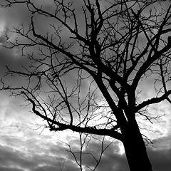 "фото ""the shades of night"""