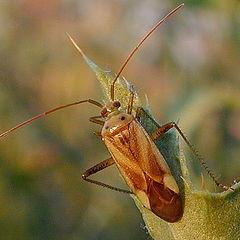 """photo """"Beetle"""""""