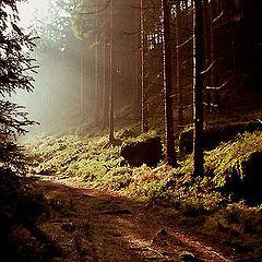 "photo ""Road to sunshine"""