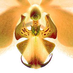 "фото ""Орхидеи. Жёлтое."""