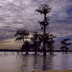 "фото ""Болото под Батон-Руж, Луизиана"""