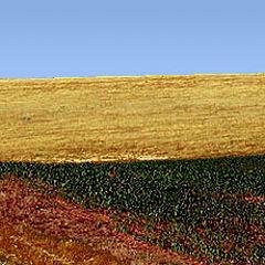 "photo ""Alentejo field"""