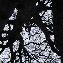"photo ""The tree"""