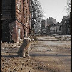 """photo """"Doggy blues..."""""""
