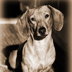 "фото ""Коридор, солнце, хитрый собак"""