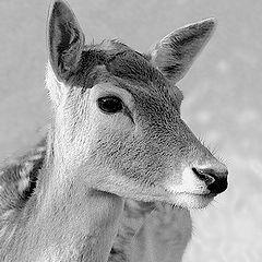 """фото """"Bambi"""""""