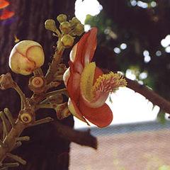 """photo """"Floret"""""""