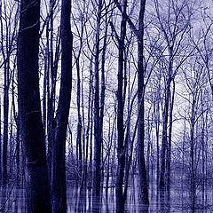 """фото """"River Blues"""""""