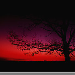 """фото """"Intrigue in Twilight..."""""""