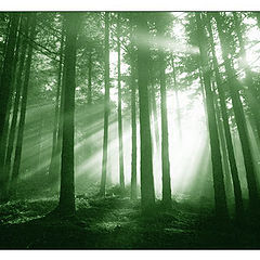 """фото """"Magic forest"""""""