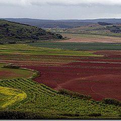 """фото """"Land Colors"""""""