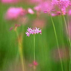 """фото """"Pink & Green"""""""
