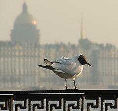 "photo ""City birds - Gull"""