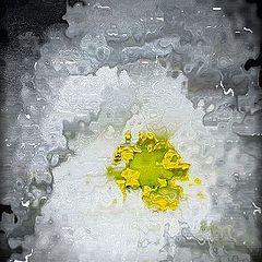 "photo ""WATER FLOWER"""