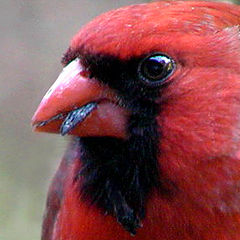 """photo """"One Feisty Red-Head....."""""""