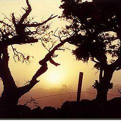 """photo """"Pico`s trees"""""""