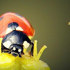 """photo """"Red+Yellow"""""""