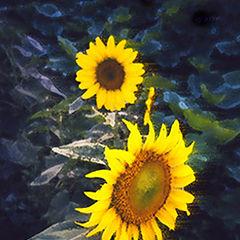 "фото ""flower#1"""
