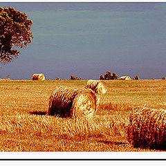 """фото """"golden field"""""""