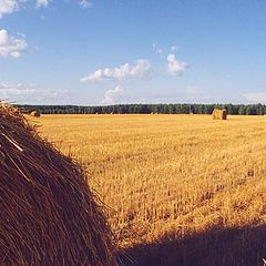 "photo ""Field"""