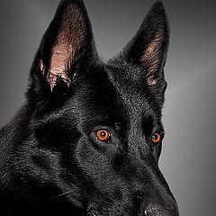 "фотоальбом ""dogs"""