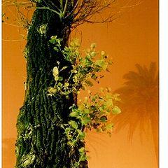 "фото ""Creepy Tree"""