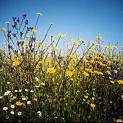 "фото ""spring"""