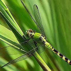 "photo ""Green Dragon"""