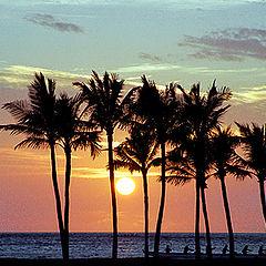 """фото """"Гавайская серия: Пальмовый закат"""""""