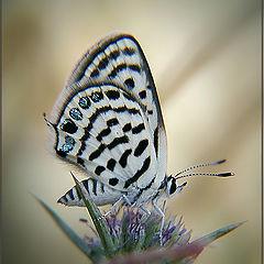 """photo """"White leopard"""""""